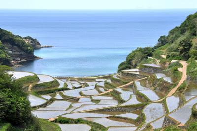Hamparan Sawah di Hamanoura Jepang