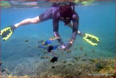 Snorkeling di Pulau Umang