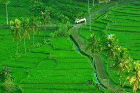 Hamparan Sawah di Bali yang Indah Menawan