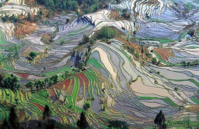 Hamparan Sawah di Longji China