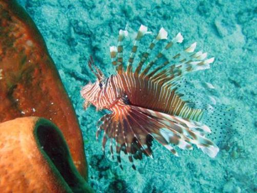 Tempat Diving di Pulau Bangka