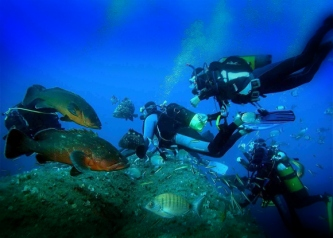 Tempat Diving di Pulau Bintan