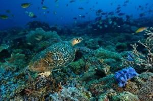 Tempat Diving di Pulau Dewawan
