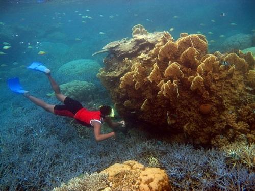 Tempat Diving di Karimun Jawa