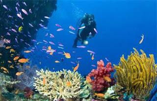 tempat-diving-menawan-di-indonesia