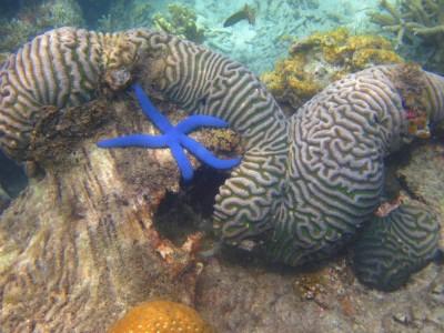Tempat Diving di Kepulauan Seribu