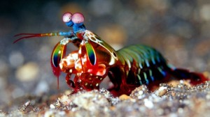 mantis_shrimp_body_armor-7