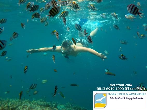 pahawang-tempat-snorkeling-eksotis-di-lampung