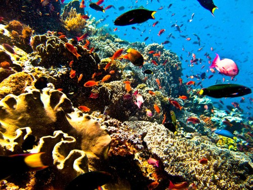 Tempat Diving di Bunaken