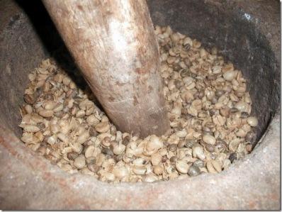 Pengupasan Kulit Biji Kopi Luwak secara Tradisional