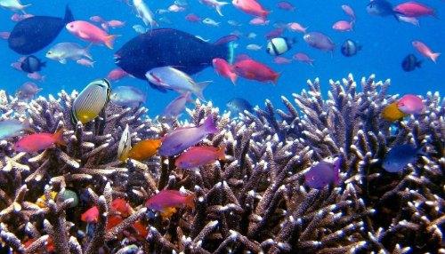 Tempat Diving di Labuan Bajo