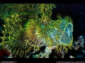 scorpionfish-102169-sw