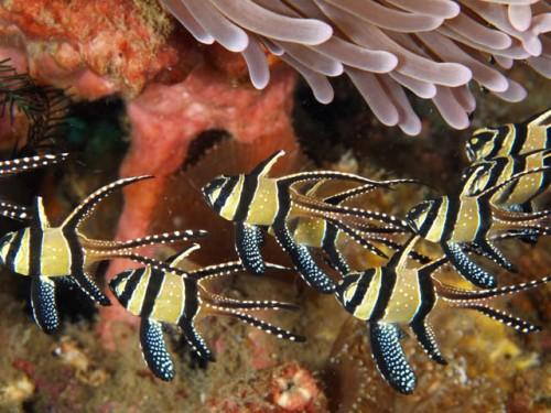 Tempat Diving di Selat Lembeh