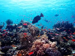 Tempat Diving di Pulau Selayar