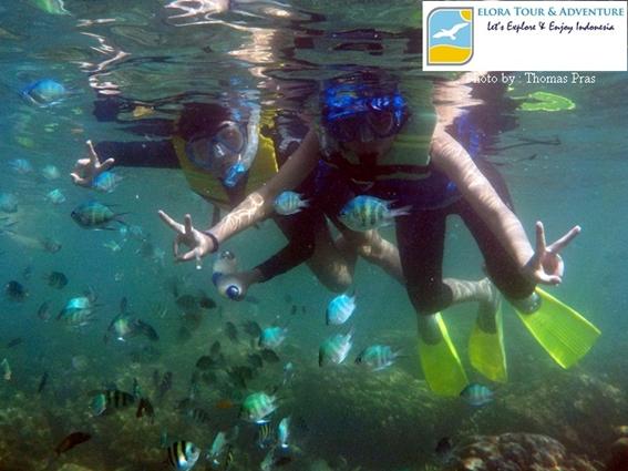Snorkeling di Cuku Bedil Pahawang Eloratour