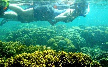 Snorkeling Pahawang 2