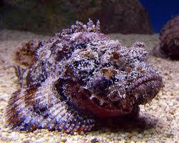 stone fish 2