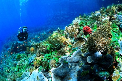 Tempat Diving di Alor