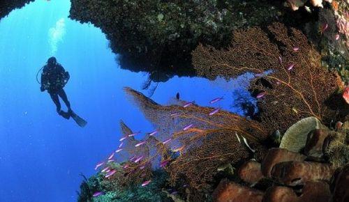 Tempat Diving di Pulau Togean