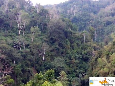 Hutan yang Menyokong Air Terjun Sukadanaham
