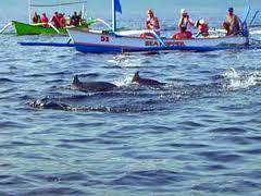 Tour Lumba-lumba Pantai Lovina