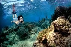Panorama bawah laut Pulau Menjangan