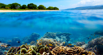 Terumbu Karang di perairan Taman Nasional Bali Barat