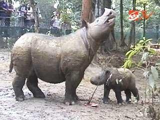 Suaka Rhino Sumatera