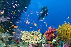 Keindahan Bawah Laut Pulau Rubiah