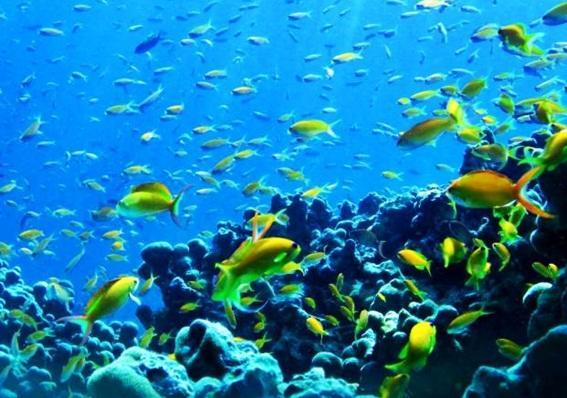 panorama-laut-pulau-rubiah-aceh