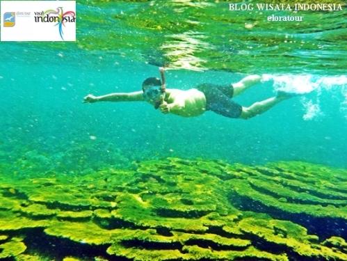 spot wisata snorkeling di pahawang lampung indonesia