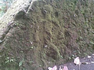 Batu Umang