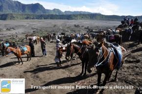 Transporter menuju Puncak Bromo