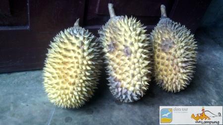 Durian Lampung 2