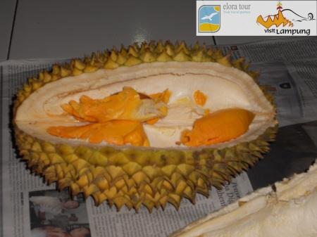 Durian Lampung 3