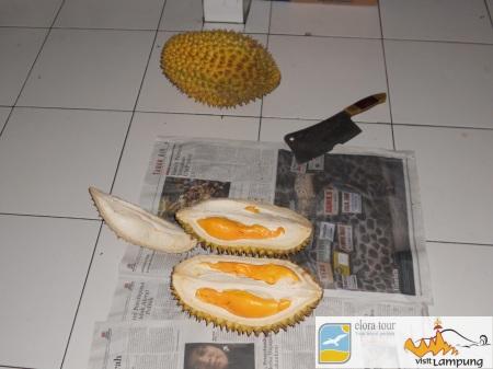 Durian Lampung 5