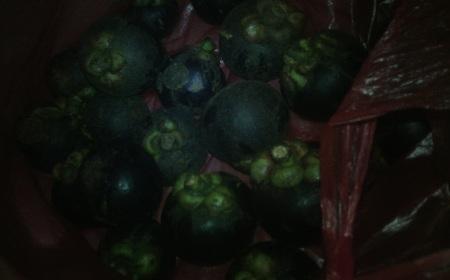 Manggis Lampung 1