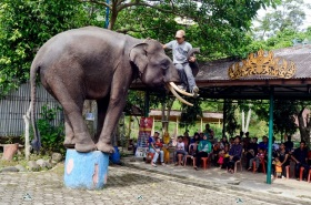 Taman Wisata Bumi Kedaton, Atraksi gajah