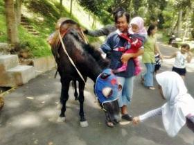 Taman Wisata Bumi Kedaton, Kuda Tunggang