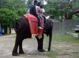 Taman Wisata Bumi kedaton, Naik gajah