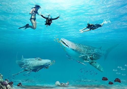 Atraksi berenang bersama hiu dan paus di Funtasy Island Kepulauan Riau