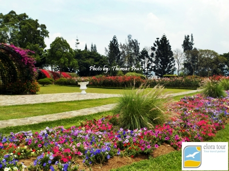 Bunga bunga Bermekaran di Taman Bunga Nusantara eloratour