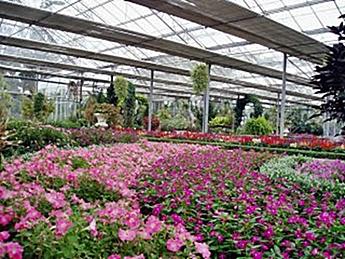 Rumah Kaca Taman Bunga Nusantara eloratour
