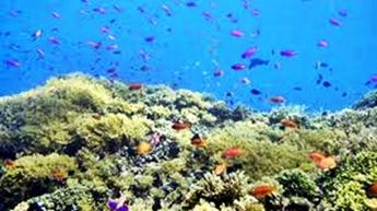 Snorkeling di Pulau Tikus Bengkulu eloratour