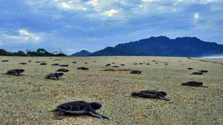 Pantai Sukamade Jawa Timur eloratour