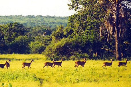 Taman Nasional Baluran Jawa Timur eloratour