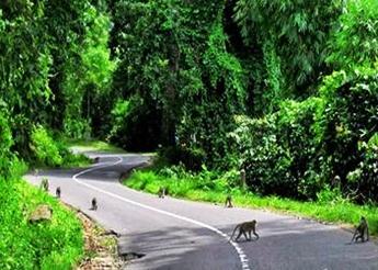 Hutan Monyet Pusuk di nusa tenggara barat