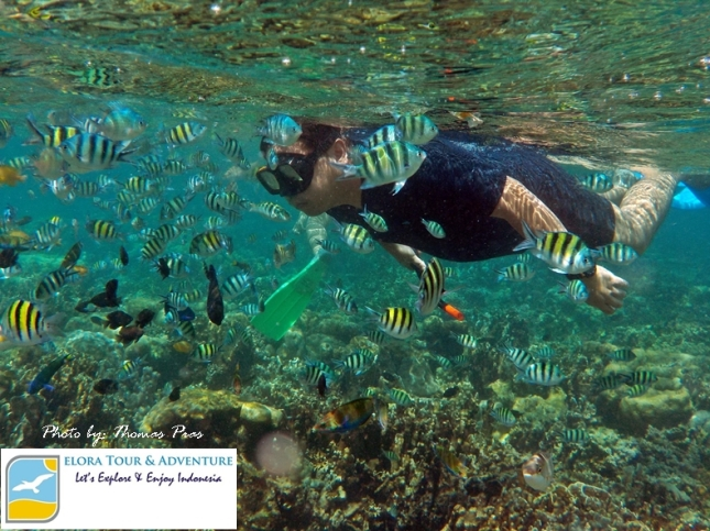 Wisata Happy Snorkeling at Pahawang ELORA TOUR & ADVENTURE