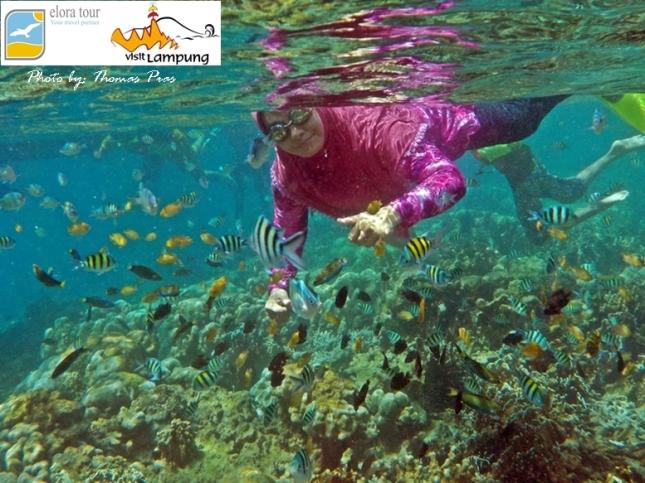 Wisata Keluarga Happy Snorkeling at Pahawang eloratour