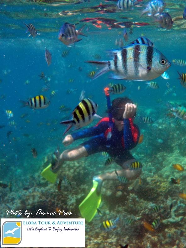 Wisata Keluarga Happy Snorkeling di Pahawang ELORA TOUR & ADVENTURE
